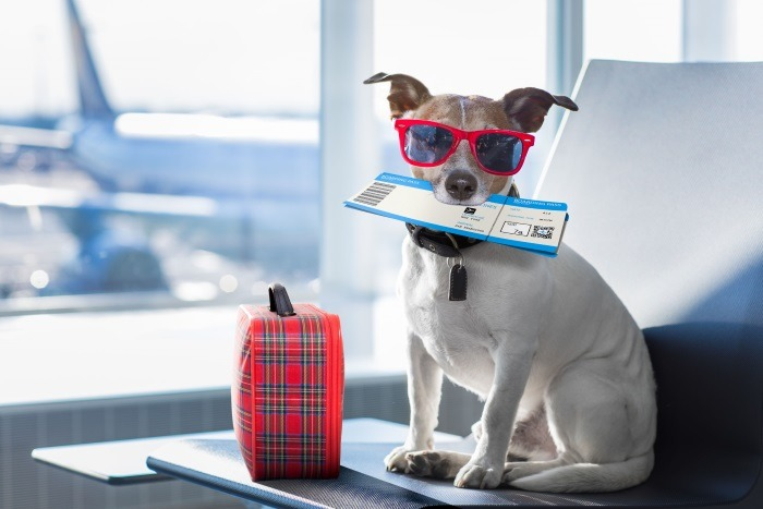 dog on airport